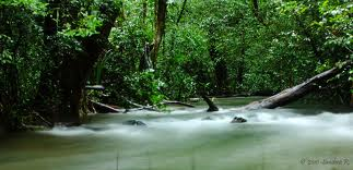 Thirthahalli Tourism Information - Agumbe